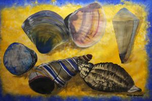 sea shells by Margo Humphries