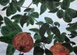 Appletree by Margo Humphries. Size 41x29. $40 FRAMED