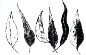 Gumleaves by Margo Humphries