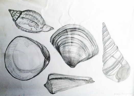 """""""Sea Shells 4"""" by Margo Humphries - Original FOR SALE $10 - pencil on paper - 29x41cm"""
