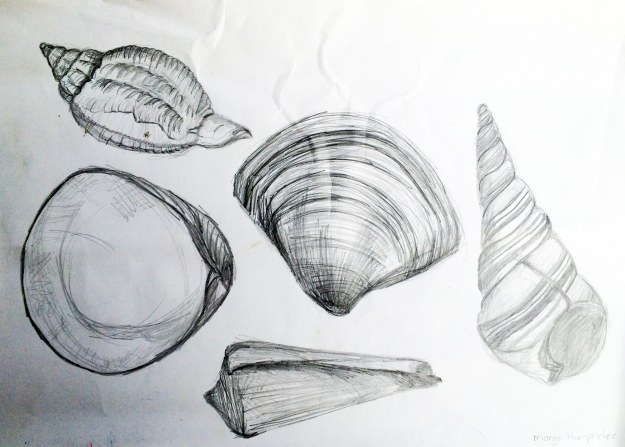 """Sea Shells 4"" by Margo Humphries - Original FOR SALE $10 - pencil on paper - 29x41cm"